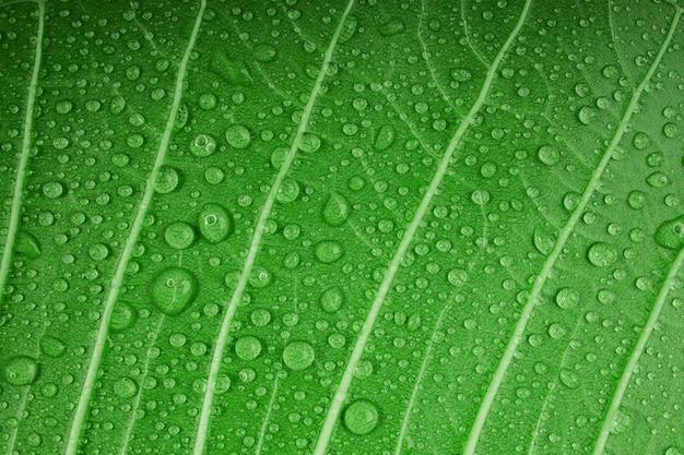 Концепция природы. крупный план зеленых листьев с множеством капель. свежесть благодаря каплям воды. забота об окружающей среде и устойчивые ресурсы. естественный зеленый фон текстуры поверхности