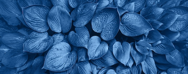 Nature concept. top view. green leaves texture in monochrome color. trendy blue and calm color. tropical leaf background.