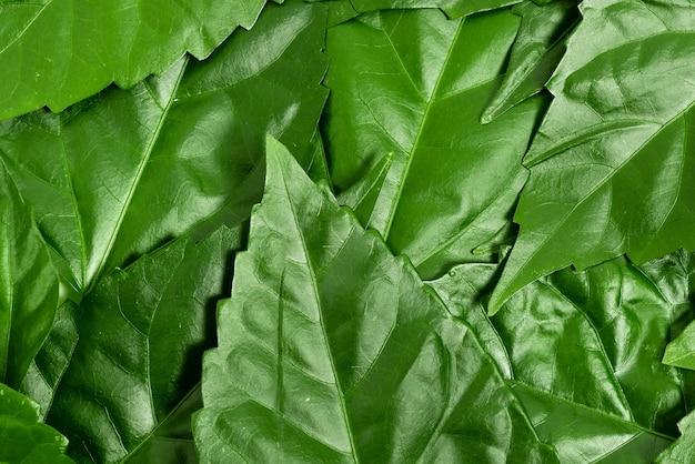 Идеи по охране природы написание планов по сохранению окружающей среды органические материалы садоводство