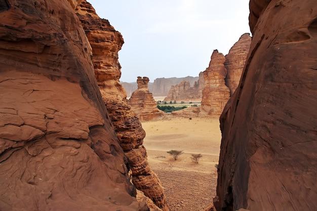 Nature in the desert close al ula, saudi arabia