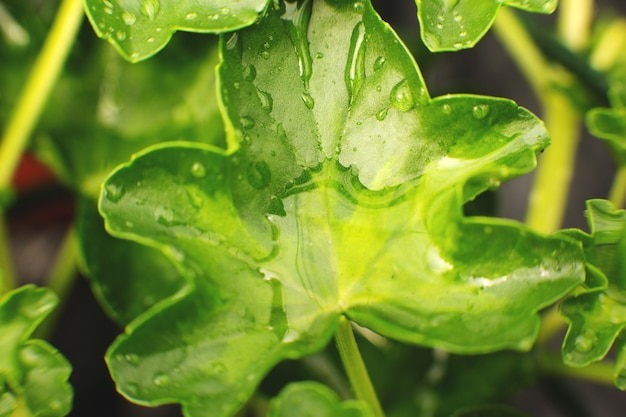 Nature detail. green leaf in the garden with droplets of water