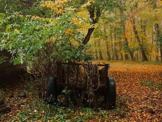 自然林秋の霧の葉