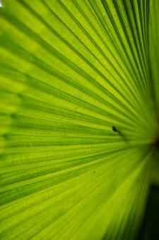 자연 숲 아름다운 매크로 텍스처