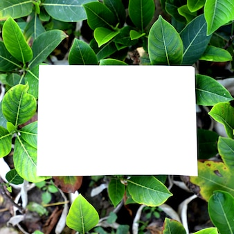 Nature Garden Leaves Background
