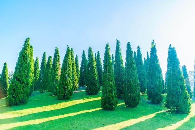 自然の草森の荒野松