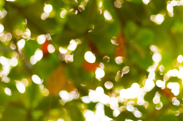 Nature green bokeh and blur leaf branch abstract texture