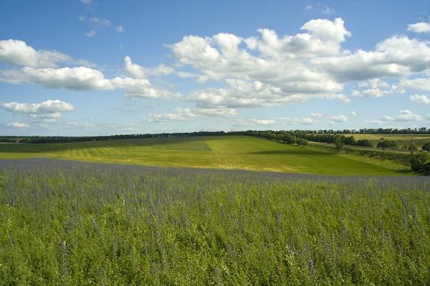 Природа. зеленое поле и голубое небо