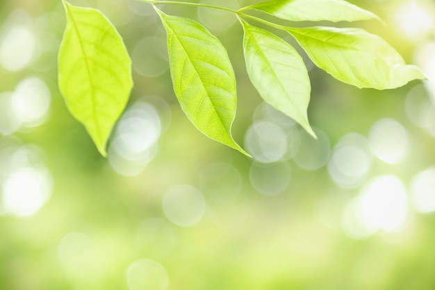 Nature green leaf on blurred greenery background with bokeh and copy space.