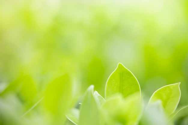 Nature green leaf on blurred greenery background with copy space.