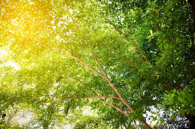 Nature of green leaf sunlight backgrounds.