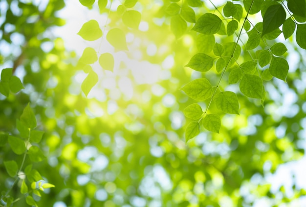 Nature green leaf and sunlight with greenery blurred background