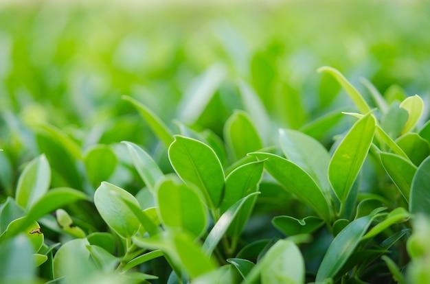 Nature green leaf