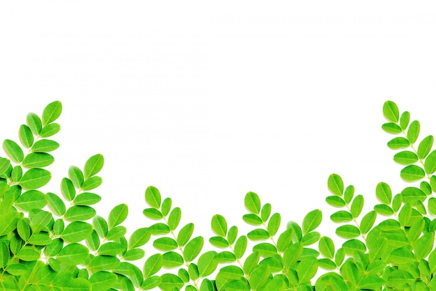 Nature green leaves frame isolate on a white background