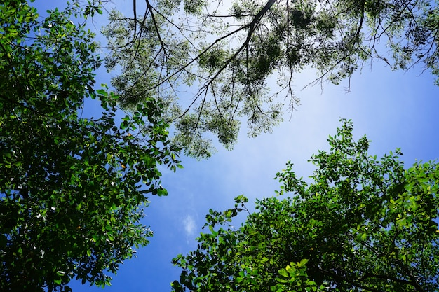 青い空に日光と自然の緑の葉