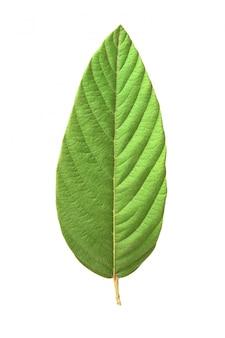 自然の緑パターン背景シーズン