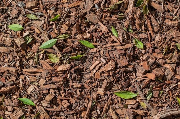 Nature ground texture