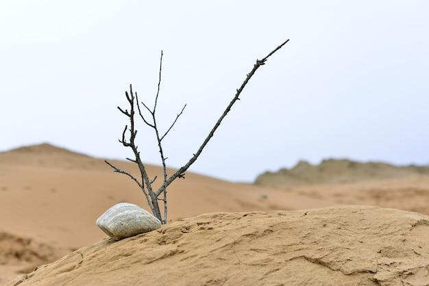Nature ikebana