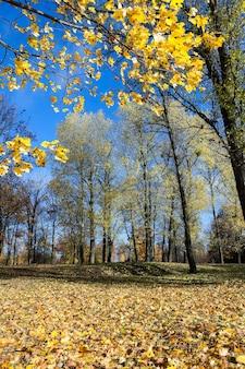 가을 시즌의 자연-올해 가을에 촬영 된 나무와 자연, 황변 한 초목과 나무