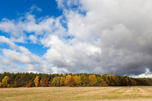 秋の自然-写真に撮られた木々とその年の秋の自然、黄ばんだ植生と木々