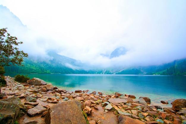 山の中の自然。