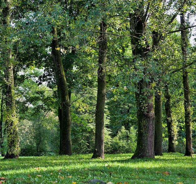 Природа осенью при смене листвы на деревьях и других растениях