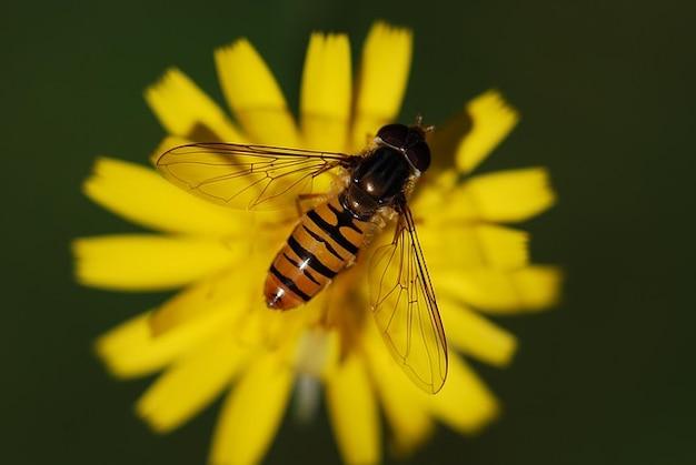 自然昆虫近いマクロホバー動物フライ