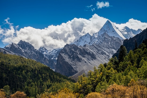 Nature landscape image, doacheng yading national park, sichuan, china.  it's beutiful place field, snow mountain,