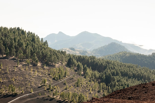 山の中の自然の風景