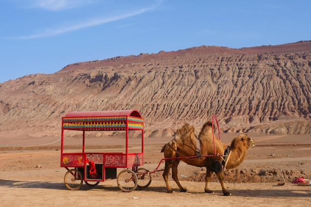 Nature landscape view of the flaming mountain and camel in turpan xinjiang province china.