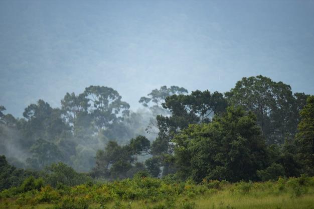 Nature landscape view of tropical rain forest, khao yai national park, thailand