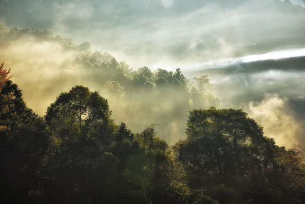 Nature landscape with fog shrouded the tops of the trees
