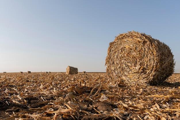 Природный пейзаж с сеном
