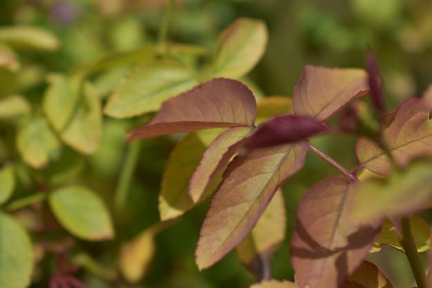 자연 잎 잎 잎 정원 화면 배경 배경 아유르베다 식물