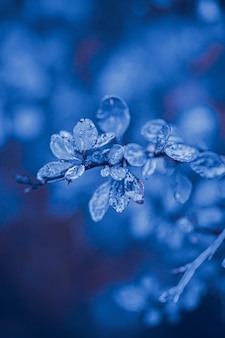 Nature leaves water drops blue color tone
