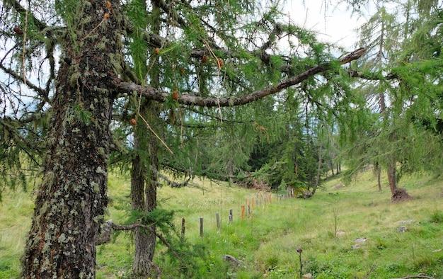 오스트리아 알프스 산맥의 자연 초원