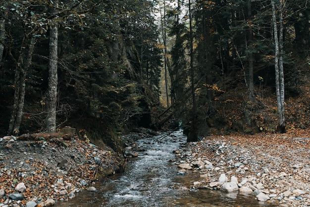 自然の山々森の川の風景旅行