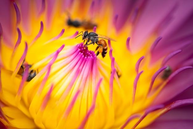 배경으로 사용하는 정원의 꽃과 꿀벌의 자연 표지 페이지
