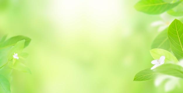 Природа свежих зеленых листьев на фоне размытой зелени
