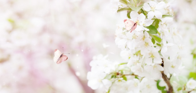 Nature panorama background. spring banner of branches with blossoming apple tree and pink butterflies.