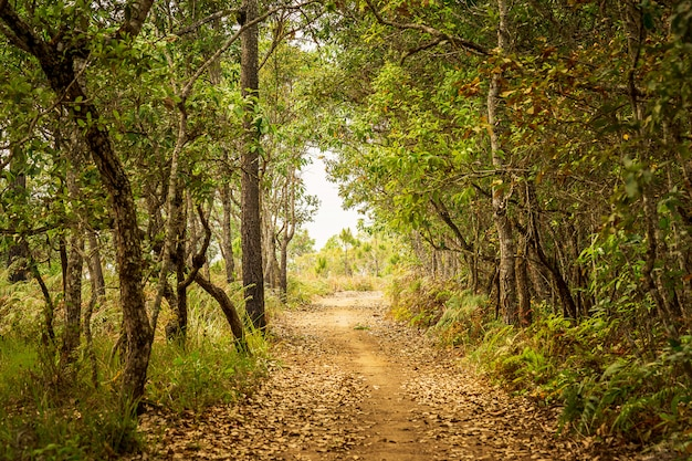 Nature pathway in forest tunnel background