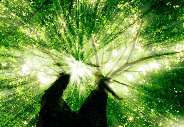 Природа. тропинка в лесу с солнечным светом