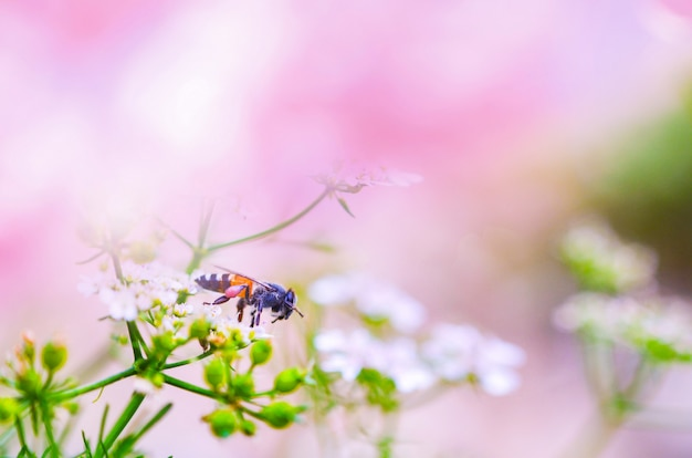 Nature pink background pink and bee on white flower