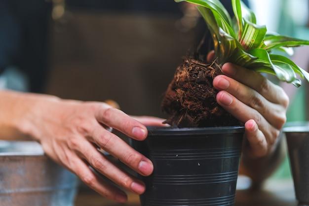 Природа, садоводство, хобби, счастливый человек, образ жизни с растущим цветочным зеленым листом и сельское хозяйство летом, концепция окружающей среды дома в хобби