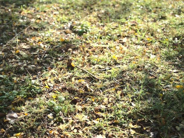 自然の季節の屋外の雰囲気乾燥した黄色がかった葉で覆われた緑の芝生のフィールドに水滴