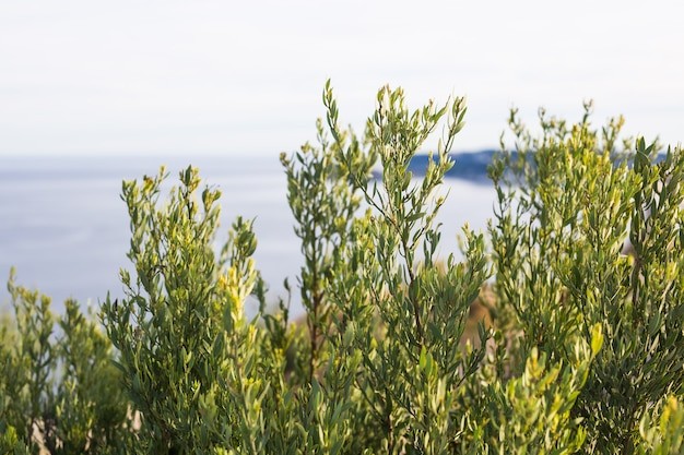 Nature and spring concept  green plant bushes on the background of the sea