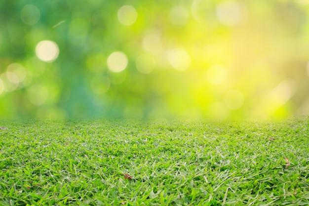 自然春草背景テクスチャ