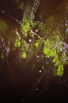 自然の夏の葉の背景、明るいボケ味の夏の森のテクスチャ。春の日差し