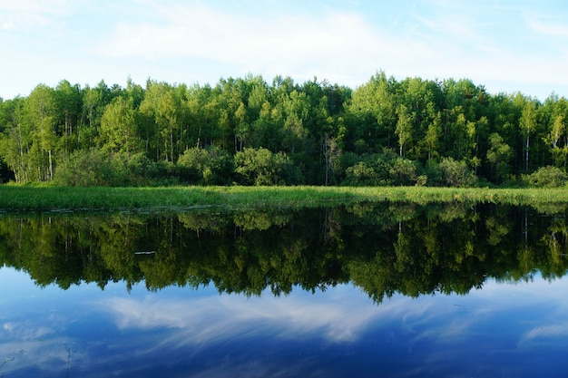 Nature in summer. green trees are reflected in the water.