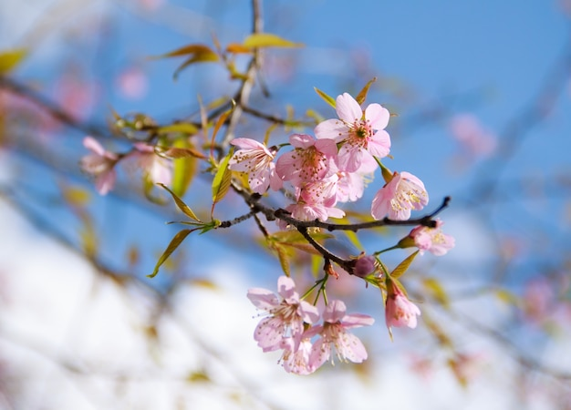 Nature texture cherry segment scene