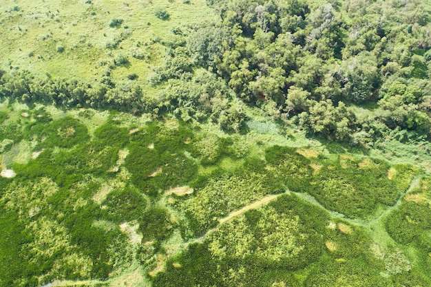 무인 항공기 카메라 높은 각도 보기에서 늪 상위 뷰에서 숲 나무 녹색 식물의 자연 질감입니다.